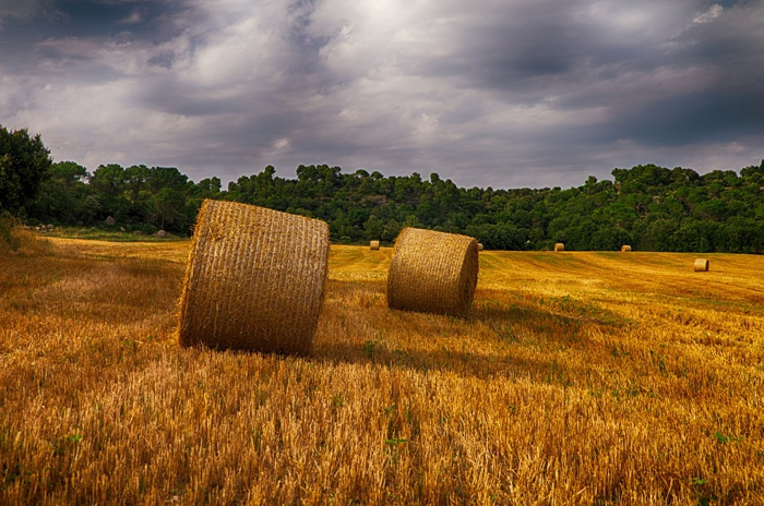 Powszechny Spis Rolny 2020 – dyżury Gminnego Biura Spisowego
