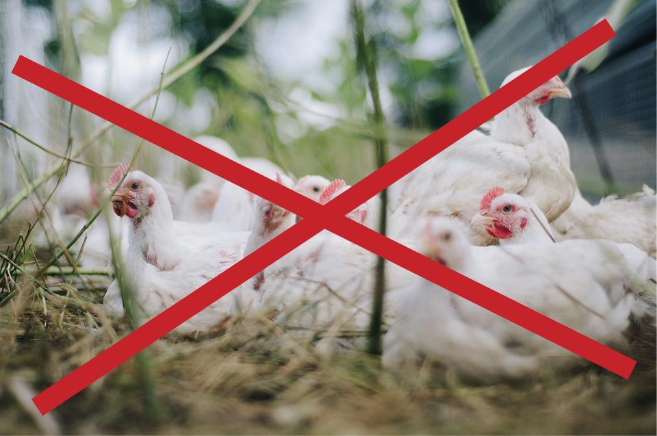 Ptasia grypa – uchylenie rozporządzenia
